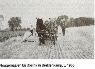 Rogge maaien bij Bosink in Breklenkamp ca. 1950