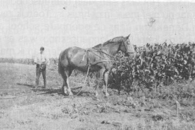 B. Kokkeler op het land van Povel 1935-1936