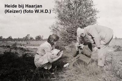Heide bij Haarjan (Keizer) (foto W.H.D.)