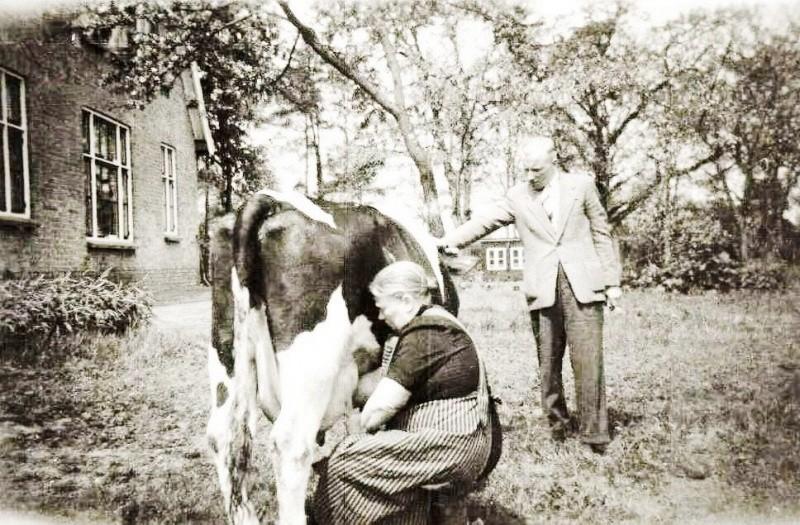 Moeder Vos-Jeurinks in Breklenkamp melkt de koe,zoon Jan kijkt toe