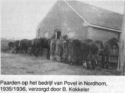 Paarden op het bedrijf van Povel in Nordhorn 1935-1936, verzorgd door B. Kokkeler