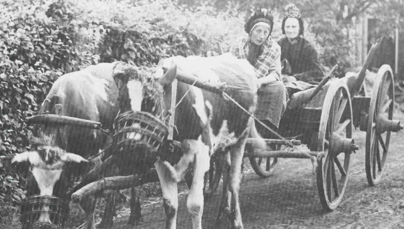 Schöppen Dika (dochter) en Mei (moeder) in Berghum met ossenwagen
