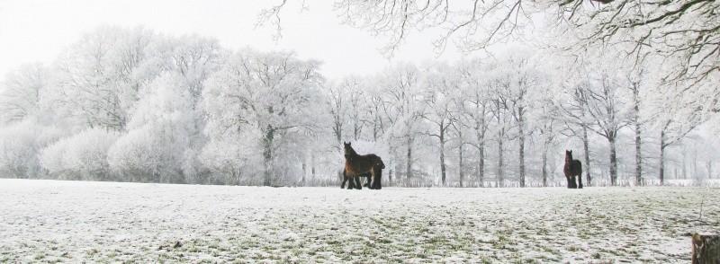 Winter in Breklenkamp 18 januari 2017