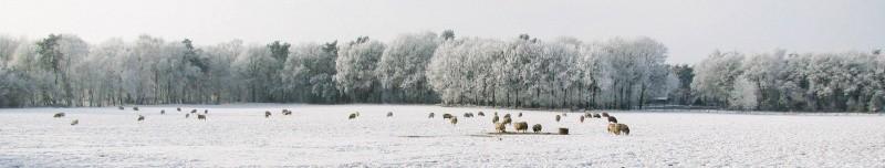 Winter in het Lattropper Veld 18 januari 2017